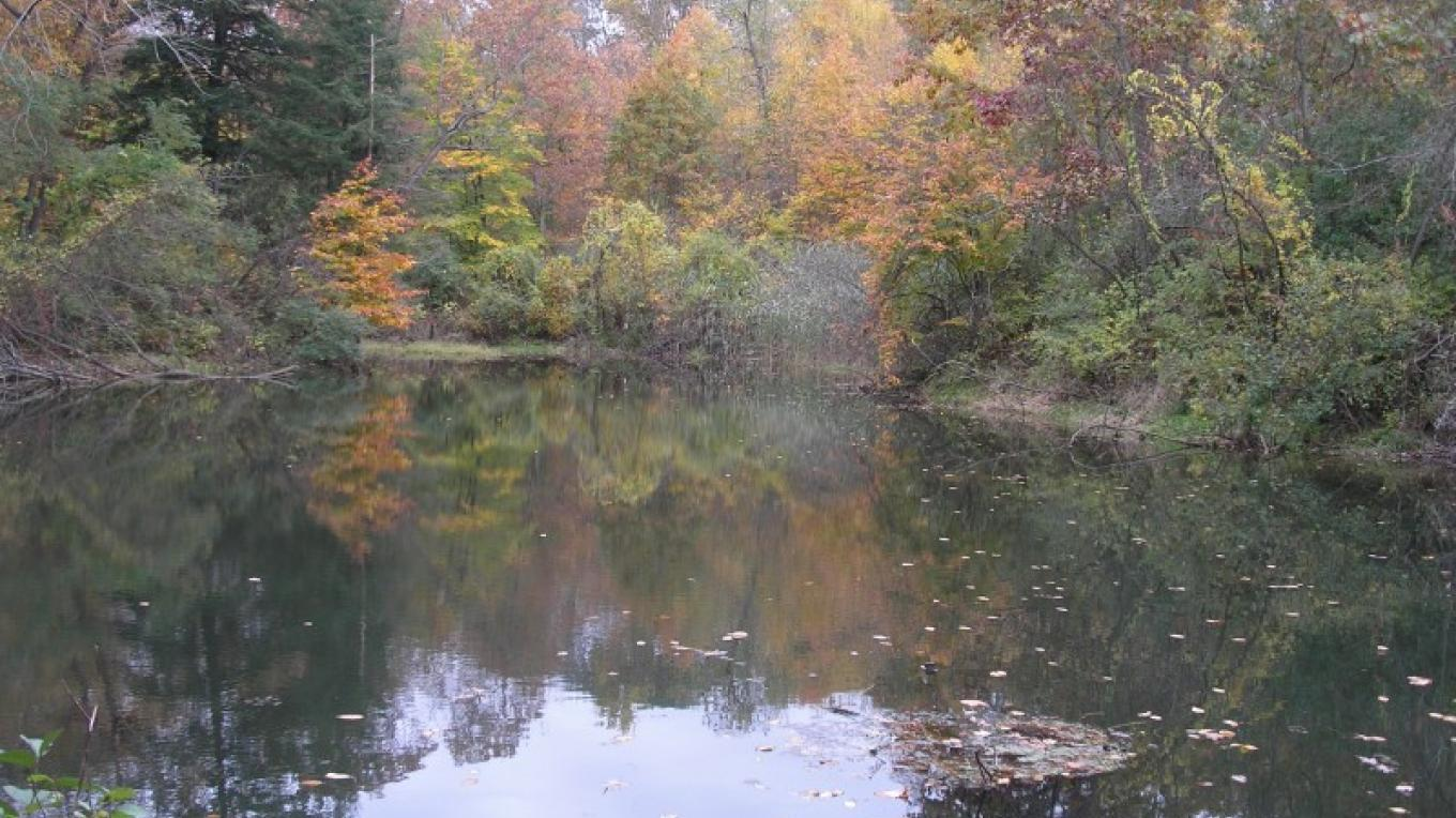 Former reservoir in October – Jennifer Viggiani