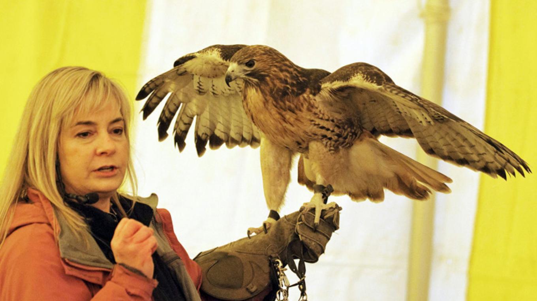 Trish with Red-tailed Hawk - TWIENY – Connie Bush
