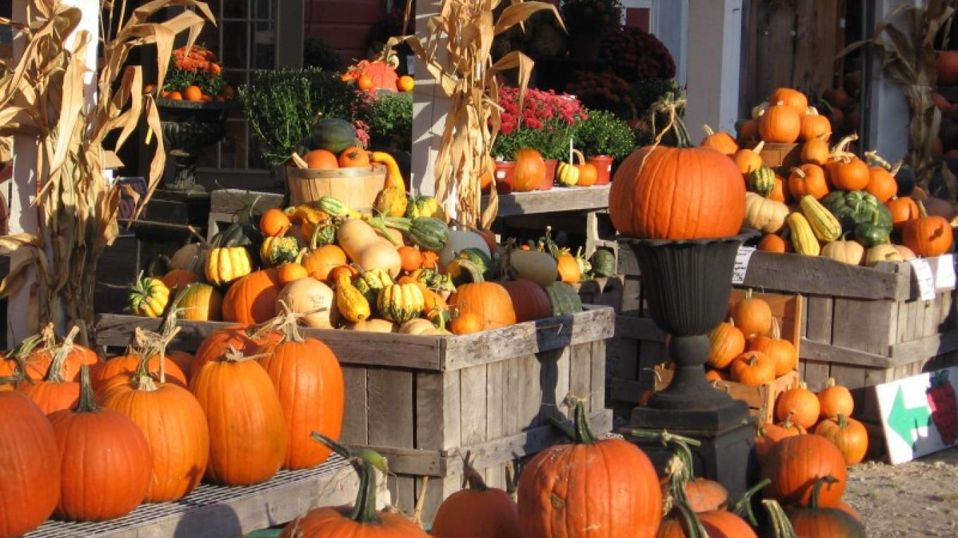 Mountains of pumpkins and gourds..fall harvest!