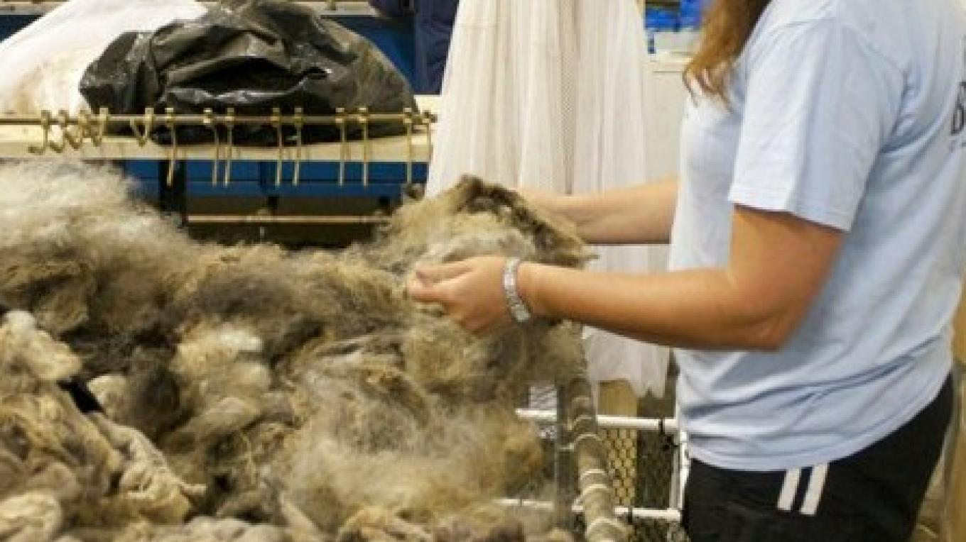 Sorting raw fleece for scouring – Lubna Dabbagh