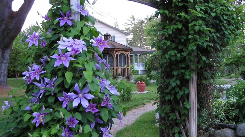 Gardens – Mark Piper