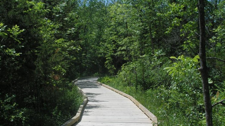 First boardwalk on trail on Mohawk Landing – Jude Hazard