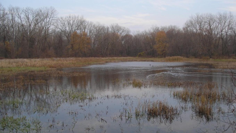 November in the Preserve – Myla Kramer