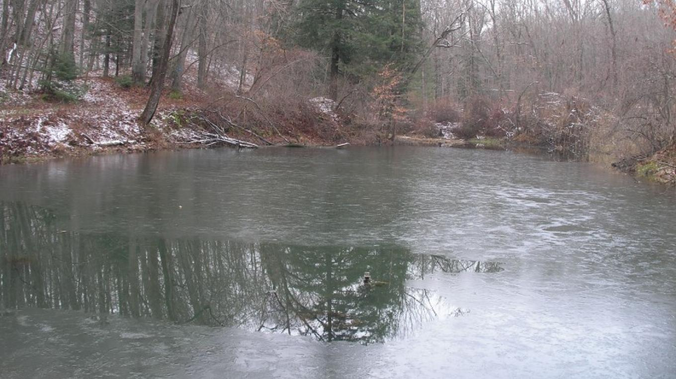 Pond view in early winter – Jennifer Viggiani