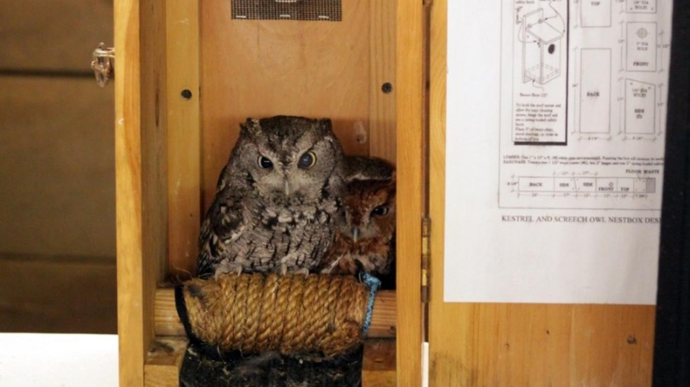 Screech Owls - NYSWRC – Cliff Oliver