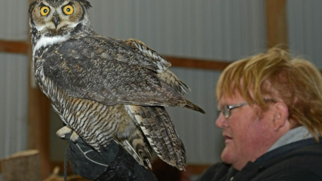Eric with Great Horned Owl - NYSWRC – Cliff Oliver