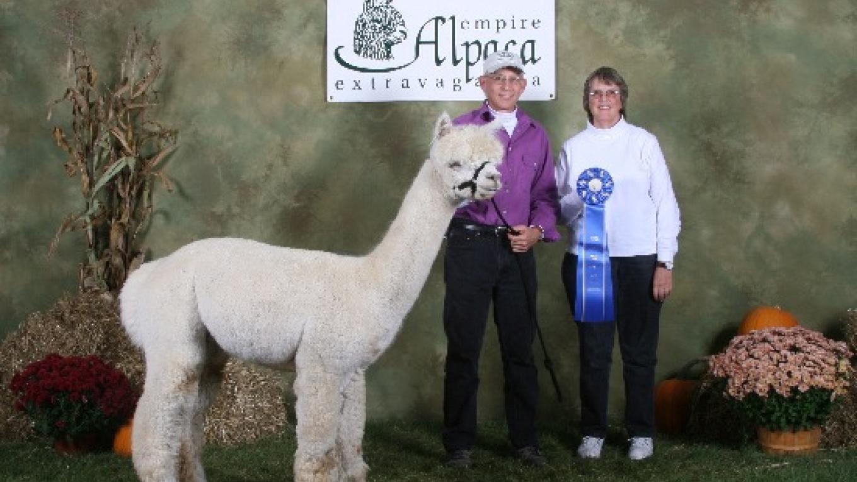 Elfenwood Alpaca