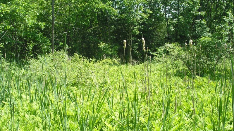 Meadow in Mohawk Landing – Jude Hazard