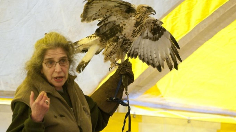 Wendy with Rough-legged Hawk - AWRRC – Connie Bush