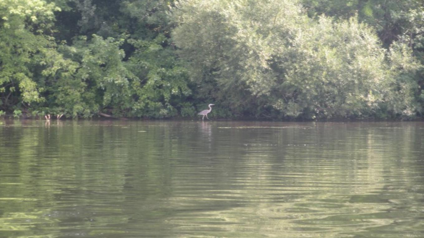 View of the preserve and blue heron  from Mohawk River – Myla Kramer