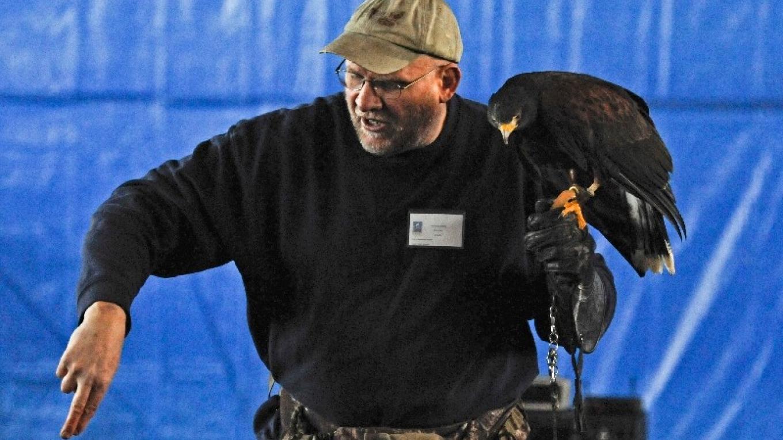 Adirondack Raptors - free-flight – Connie Bush