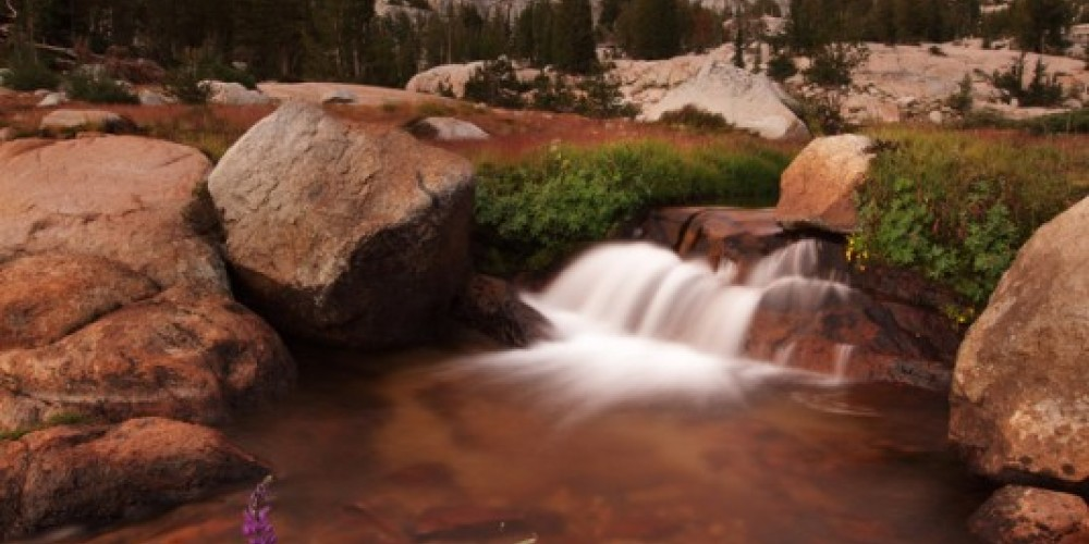 CSERC routinely monitors water quality in the forest streams of the Northern Yosemite, revealing pollution from livestock. – Forrest Stanley