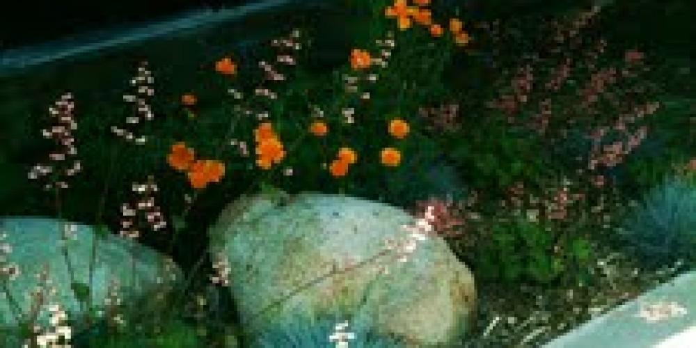 US Post Office native plant garden – Redbud Garden Club