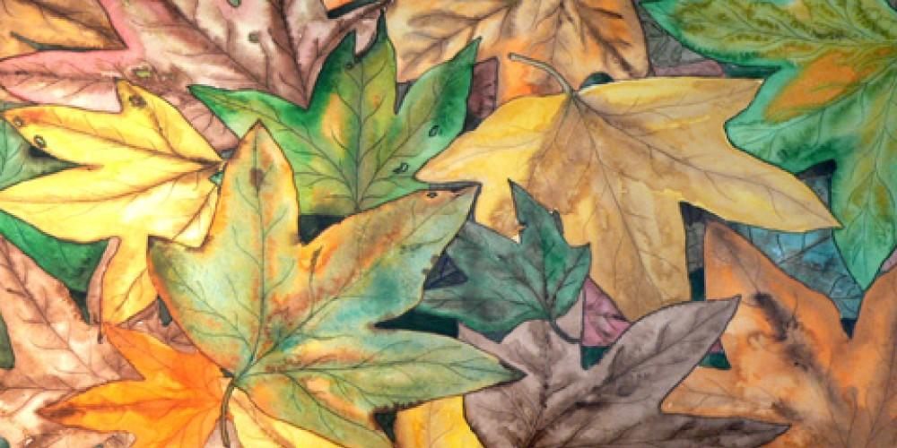 Fall Leaves by Deborah Dal Zuffo. – Nadi Spencer