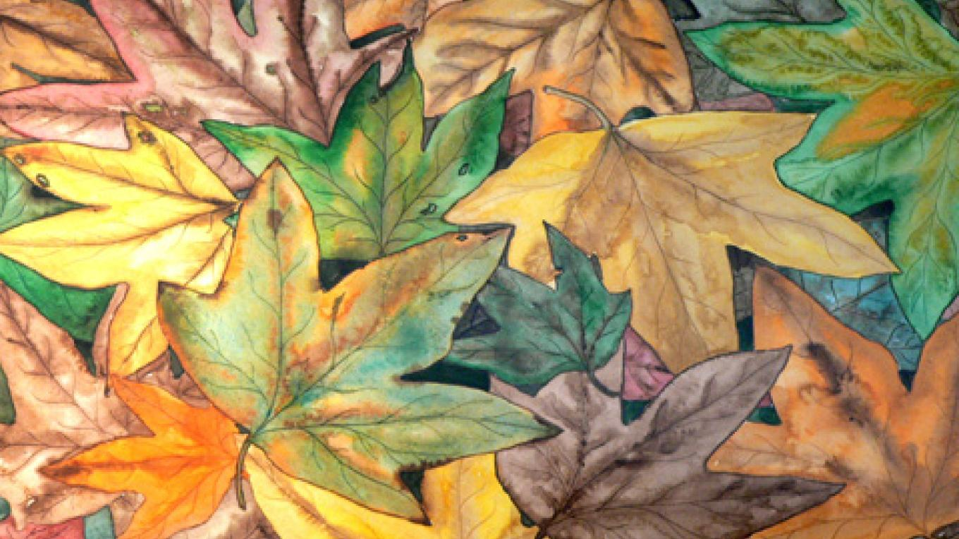 Fall Leaves by Deborah Dal Zuffo. – Nadi Spencer