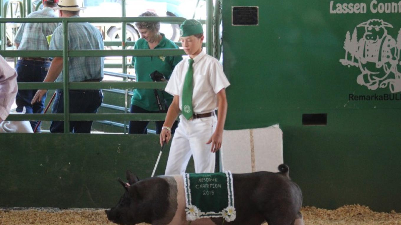 Junior Livestock Auction – Jeremy Couso