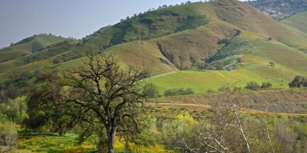 Homer Ranch hillsides in spring – John Greening