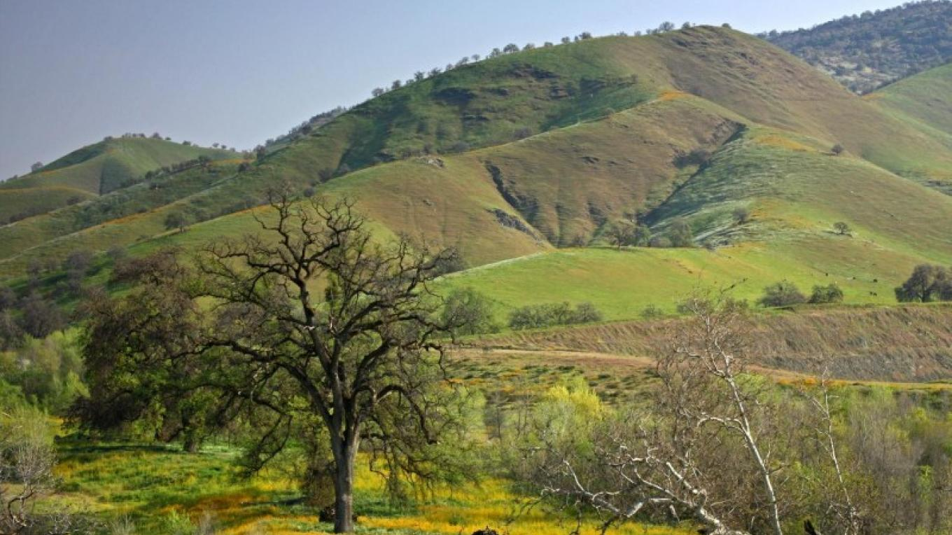 Homer Ranch hillsides in spring – John Greening