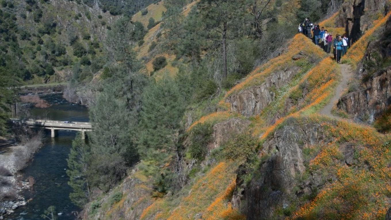 Hike among the wildflowers along the South Fork of the Merced – Charles Philips