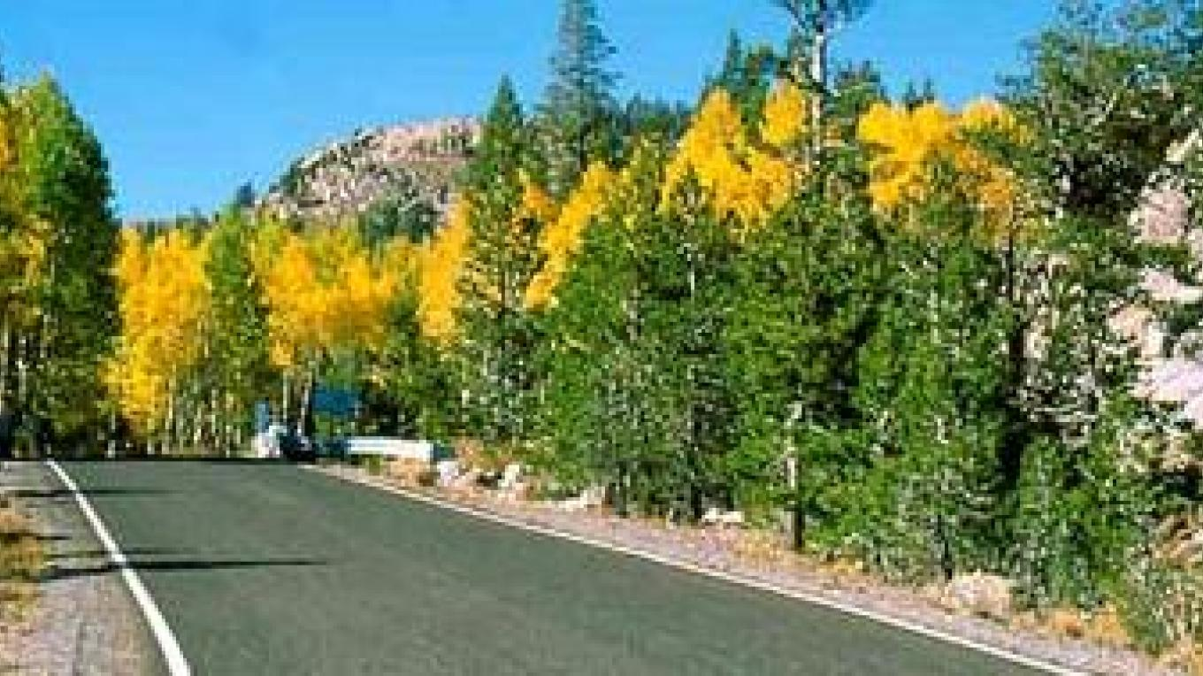 The aspens turn golden at Ebbetts Pass during autumn. – Dick James Photography