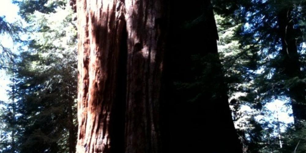 Stagg Tree 1 – Kim Batty