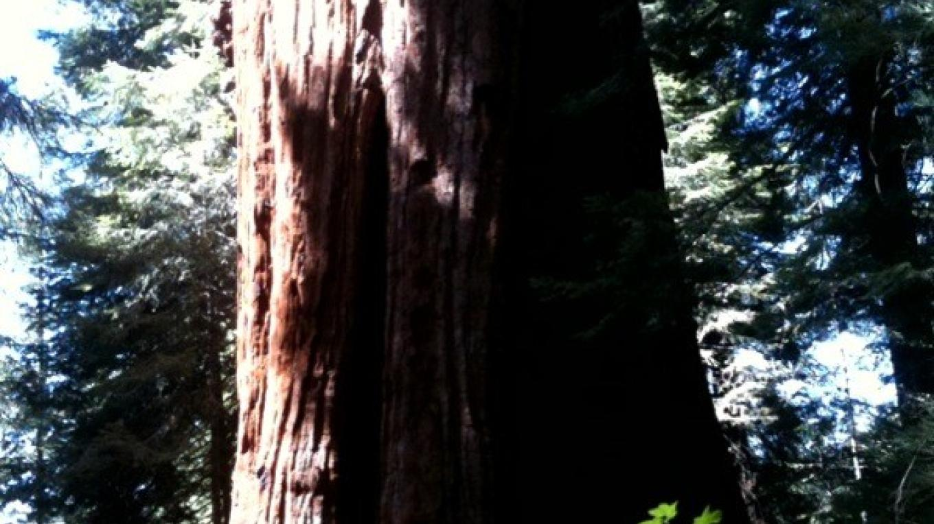 Stagg Tree 1 – Kim Batty