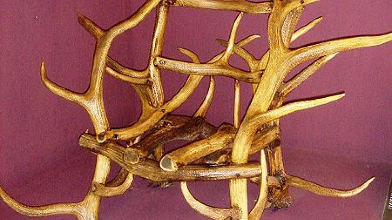 Elk Horn Chair – Dave Parker
