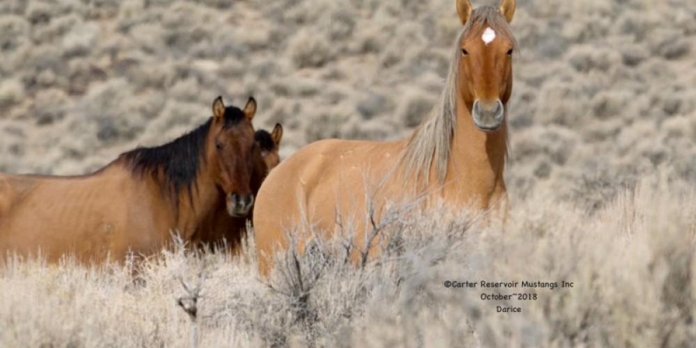 Carter Reservoir Mustangs Inc, Darice Massey