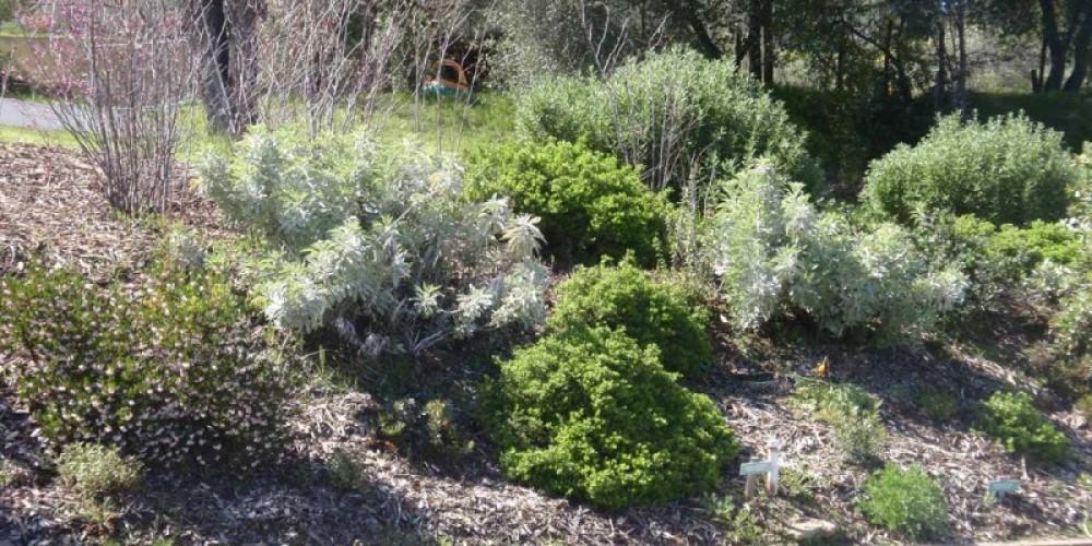 Memorial Building Native Plant Garden – Redbud Garden Club
