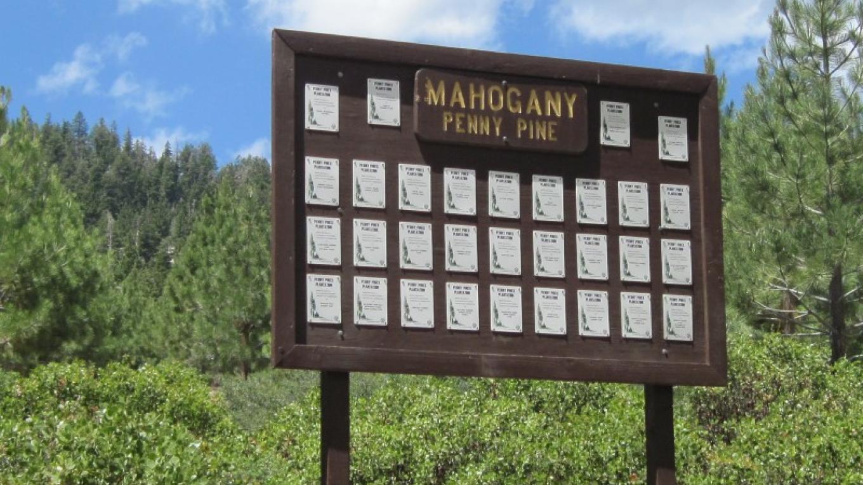 Mohogany Plantation – John Springer USDA/ FS