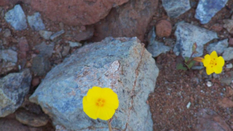 Red Hills Wildflowers up close. – Sandy Gordon