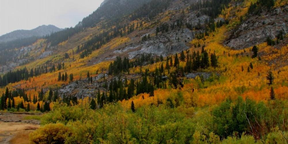 Bishop Creek autumn colors – SierraNevadaConservancy