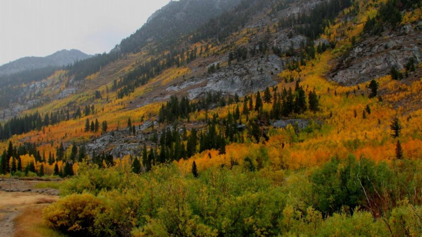 Bishop Creek autumn colors – SierraNevadaConservancy