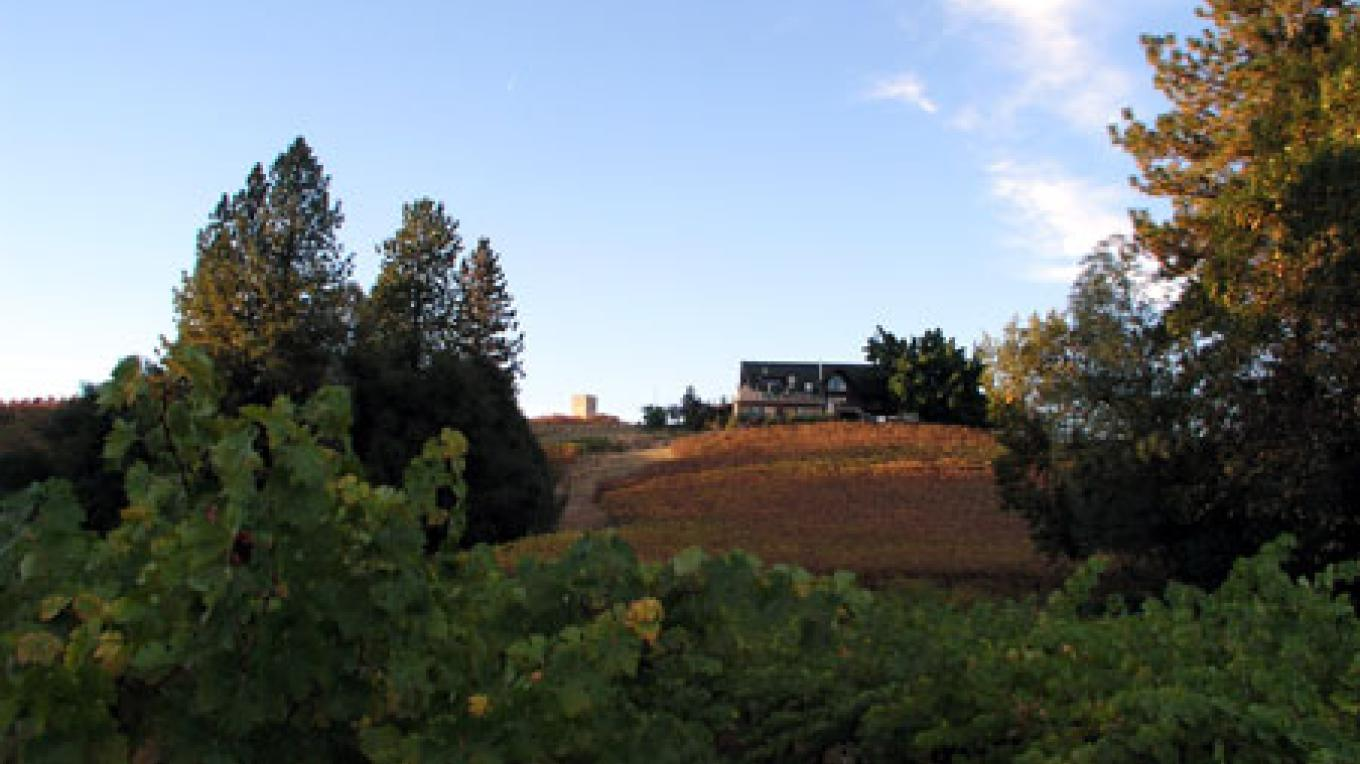 bringing in Cabernet grapes from vineyard to winery – Brian Fitzpatrick