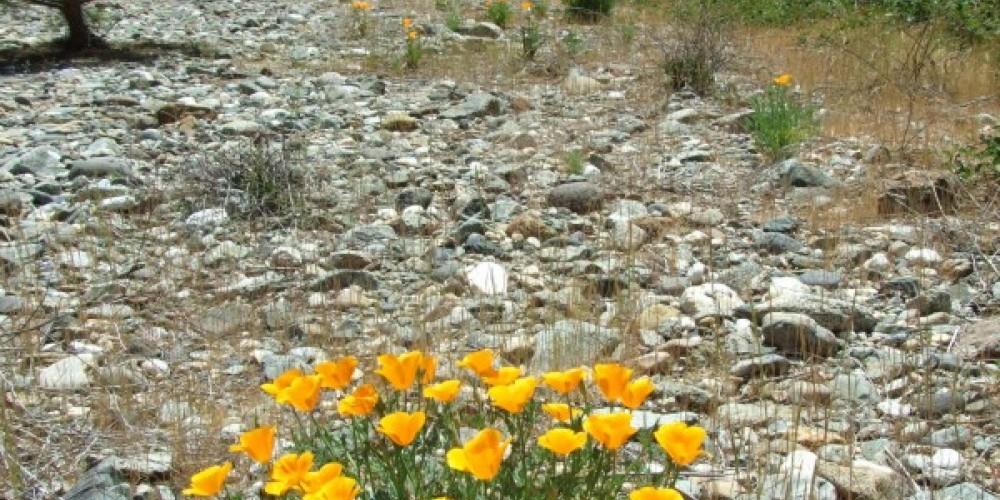 Wild Flowers in springtime off the Deer Creek Tribute Trail – American Rivers
