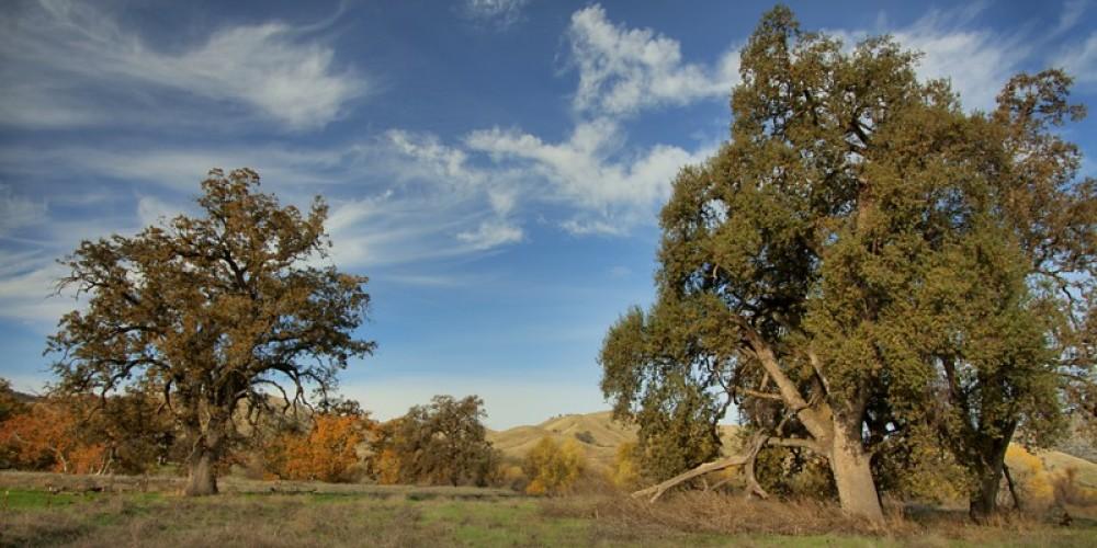 Fall vista at the preserve – John Greening