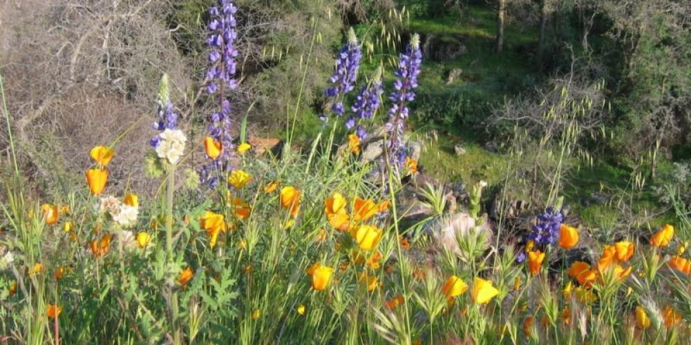 Wildflowers at Dry Creek – Hilary Dustin