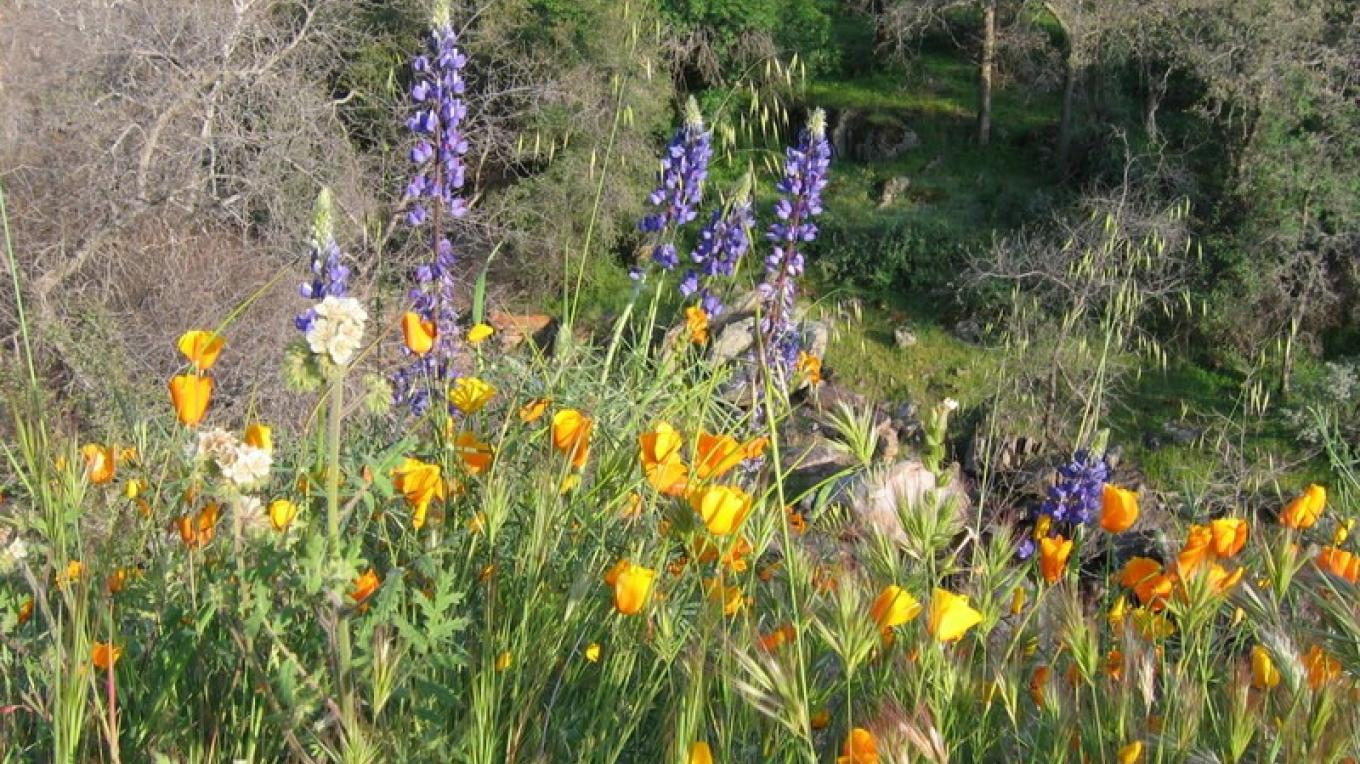 Wildflowers at Dry Creek – Hilary Dustin