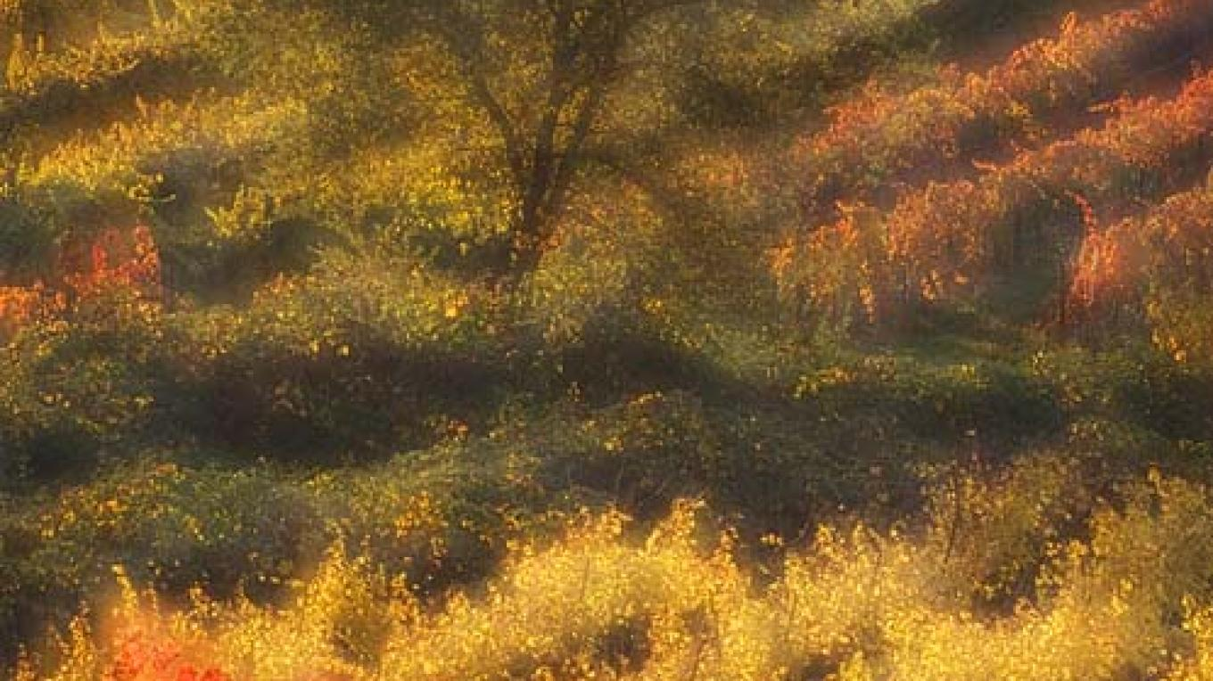 Autumn in Shenandoah Valley, Amador County – Larry Angier