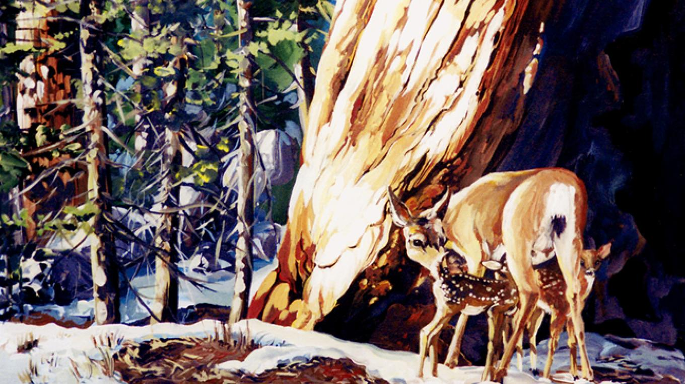 Deer and Fawns in the Sierras. – Nadi Spencer