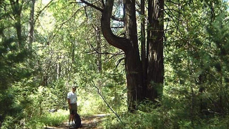 Hiking Trails – Roaring Camp