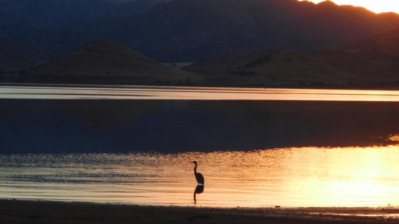 Blue Heron at Dawn on Isabella Lake – Cynthia Allred
