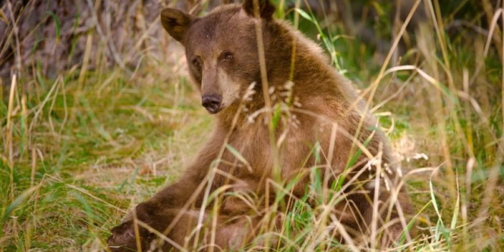 Bear and Birds Adventure Track with a photo by Scott Sady of Tahoe Light. – Scott Sady Tahoe Light