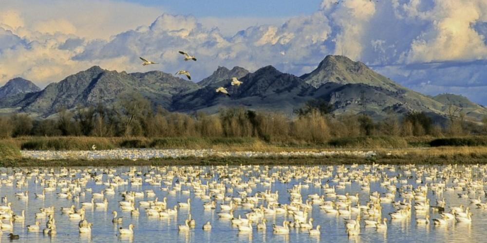 Colusa Wildlife Refuge – Mike Peters