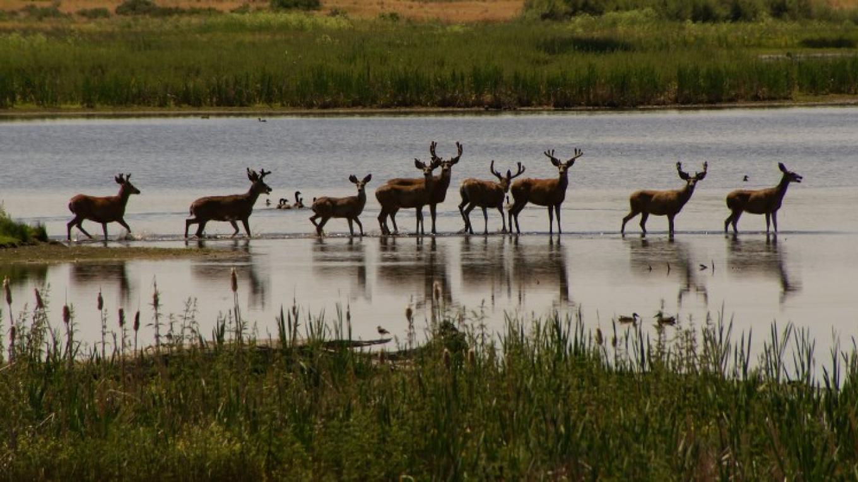 Refuge Deer – Lorissa Soriano