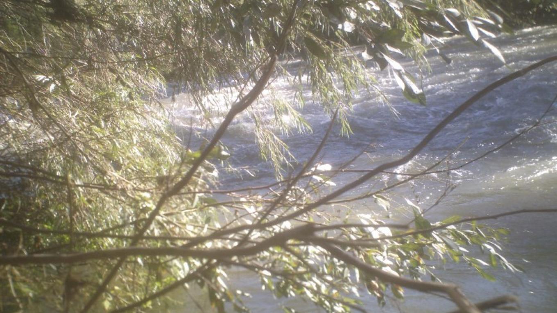 Kaweah River – Leah Catherine Launey