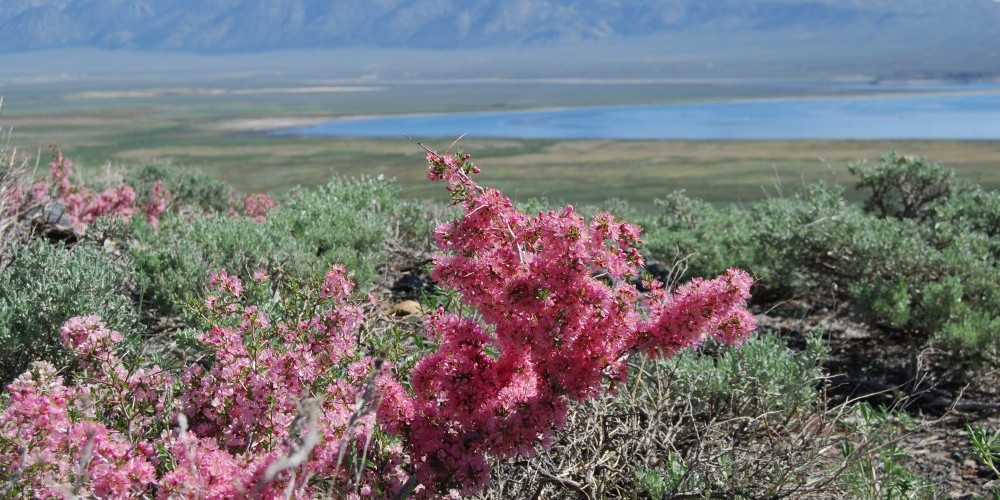Wildflowers and Crowley Lake – Sarah McCahill