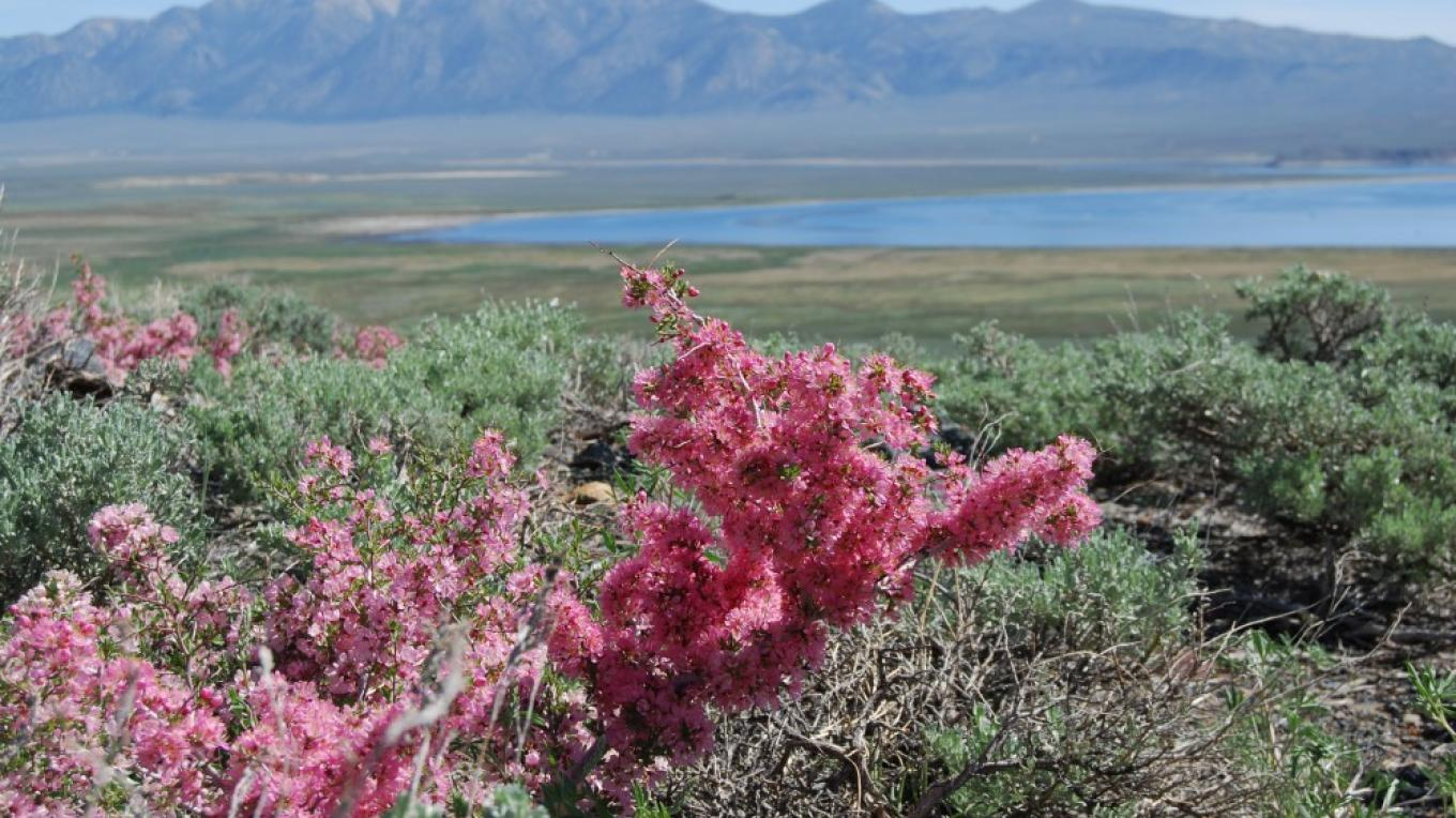 Wildflowers and Crowley Lake – Sarah McCahill