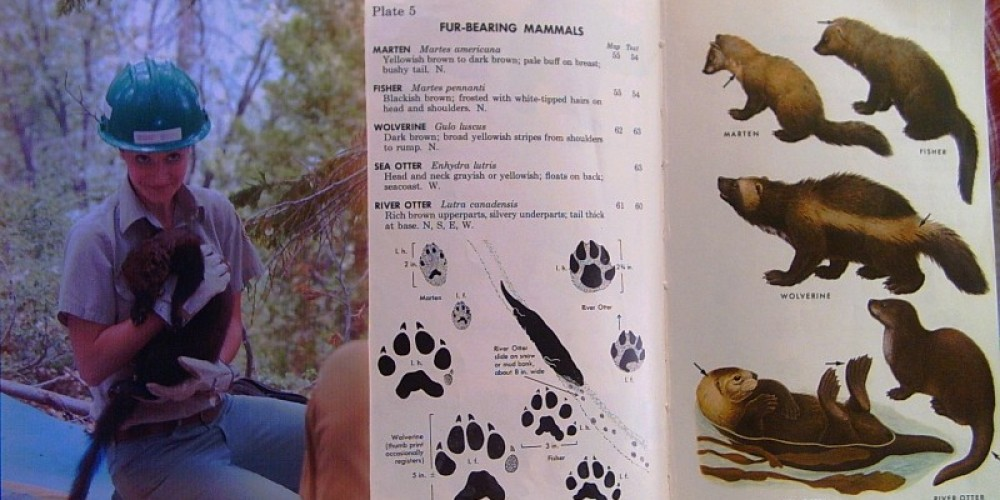 Learn about protected animals, and how to identify tracks.