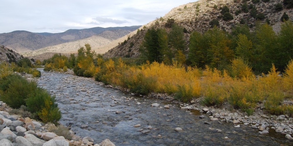 Walker River Fall Color – Sarah McCahill